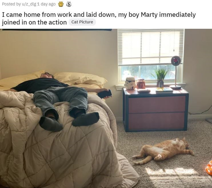 Room - Posted by u/z_dlg 1 day ago I came home from work and laid down, my boy Marty immediately joined in on the action Cat Picture