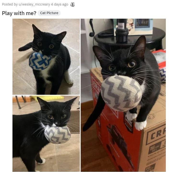 Cat - Posted by u/wesley_mccreary 4 days ago Play with me? Cat Picture CRA 16