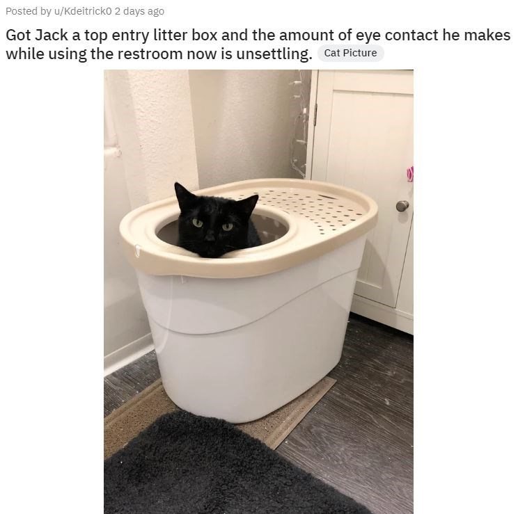 Product - Posted by u/Kdeitricko 2 days ago Got Jack a top entry litter box and the amount of eye contact he makes while using the restroom now is unsettling. Cat Picture