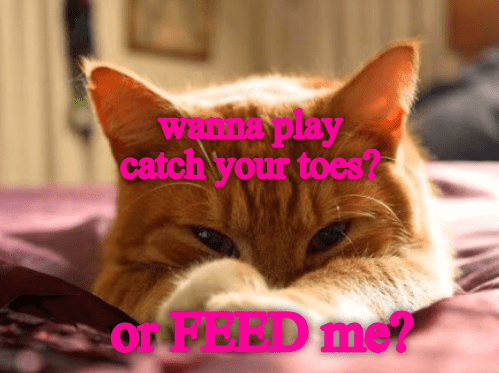 Cat - WEnna play catch your toes? OnPEED me?