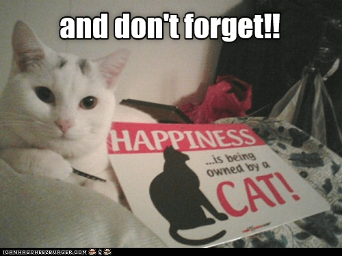 Cat - and don't forget! HAPPINESS .is being owned by a CAT! ICANHASCHEEZBURGER.COM