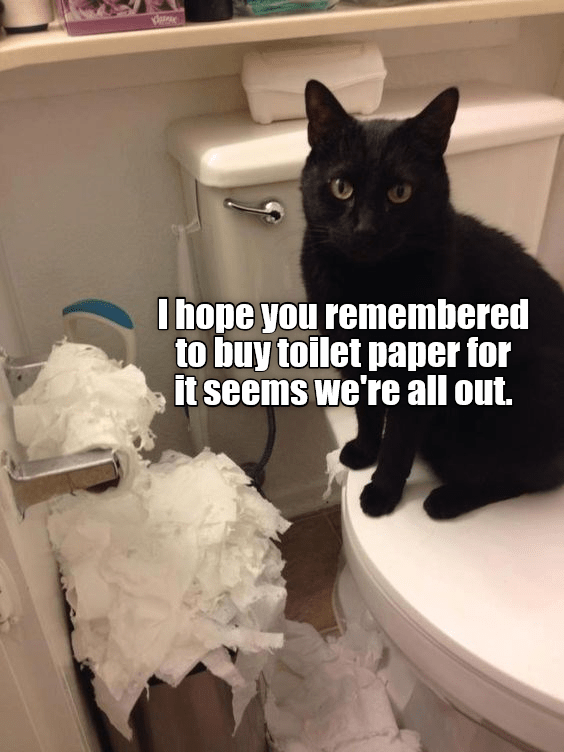 Black - I hope you remembered to buy toilet paper for it seems we're all out.