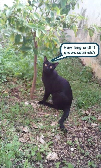 Cat - How long untilit grows squirrels?