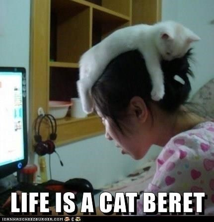 Cat - LIFE IS A CAT BERET TOANHASCHEEZBURGER.COM S