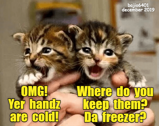 Cat - bajio6401 december 2019 OMG! Yer handz are cold! Where do you keep them? Da freezer?