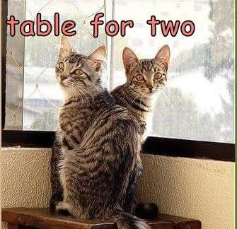 Cat - table for twO