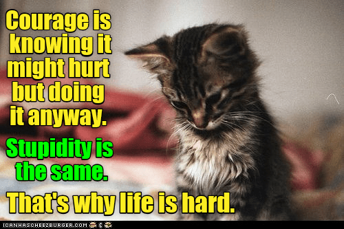 Cat - Courage is knowing it might hurt but doing it anyway. Stupidity is the same. Thats why life is hard. ICANHASCHEEZE URGER.COM