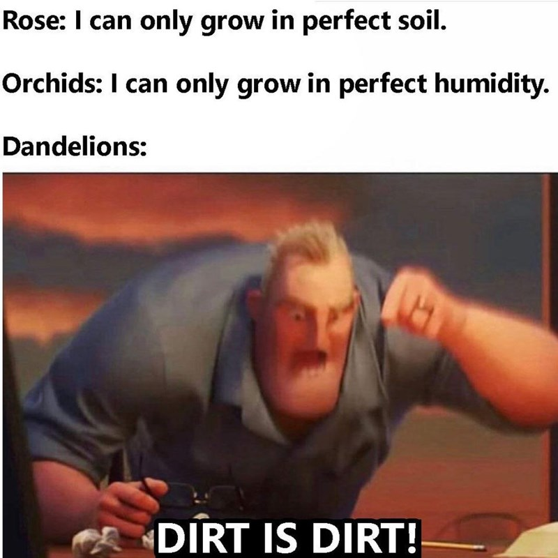 Photo caption - Rose: I can only grow in perfect soil. Orchids: I can only grow in perfect humidity. Dandelions: DIRT IS DIRT!