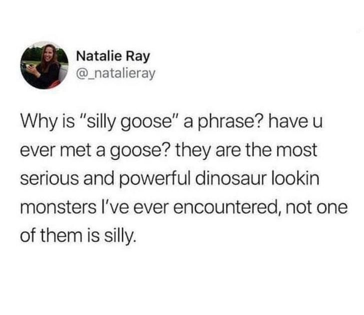 """Text - Natalie Ray @_natalieray Why is """"silly goose"""" a phrase? have u ever met a goose? they are the most serious and powerful dinosaur lookin monsters l've ever encountered, not one of them is silly."""