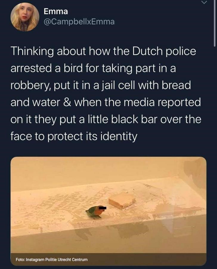 Text - Emma @CampbellxEmma Thinking about how the Dutch police arrested a bird for taking part in a robbery, put it in a jail cell with bread and water & when the media reported on it they put a little black bar over the face to protect its identity RECHT Foto: Instagram Politie Utrecht Centrum
