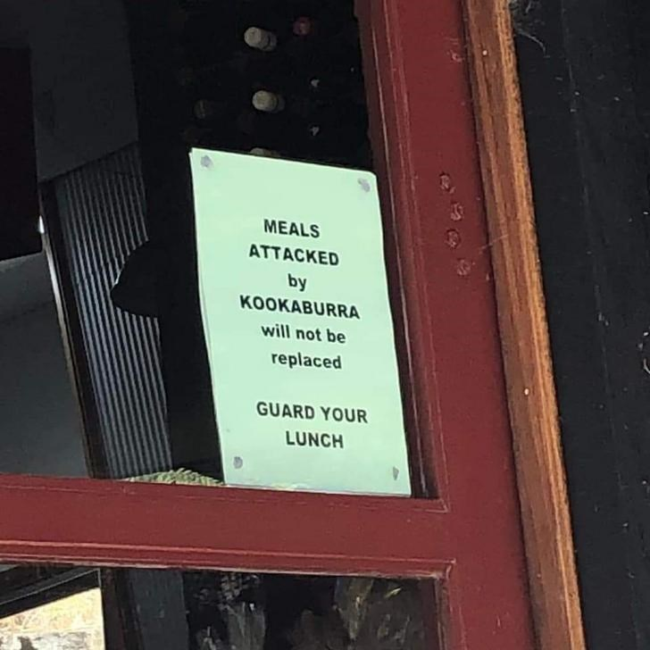 Text - MEALS ATTACKED by KOOKABURRA will not be replaced GUARD YOUR LUNCH
