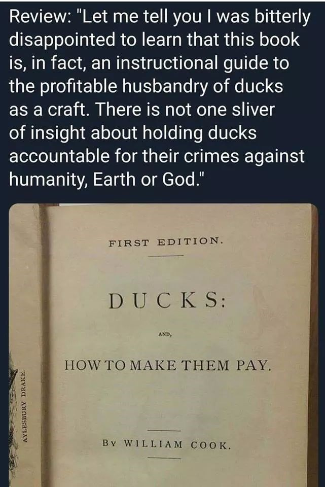 """Text - Review: """"Let me tell you I was bitterly disappointed to learn that this book is, in fact, an instructional guide to the profitable husbandry of ducks as a craft. There is not one sliver of insight about holding ducks accountable for their crimes against humanity, Earth or God."""" FIRST EDITION. DUCKS: AND, HOW TO MAKE THEM PAY. By WILLIAM COOK. AYLESBURY DRAKE."""