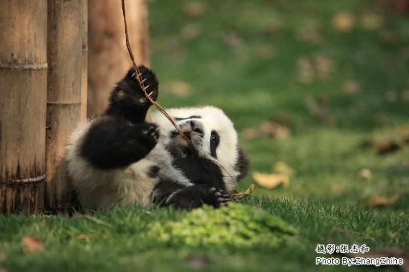 Vertebrate - Photo By.ZhangZhihe