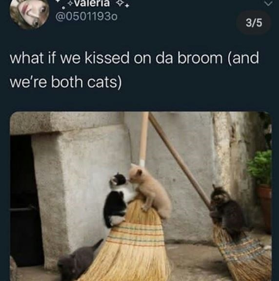 Adaptation - väleria @05011930 3/5 what if we kissed on da broom (and we're both cats)