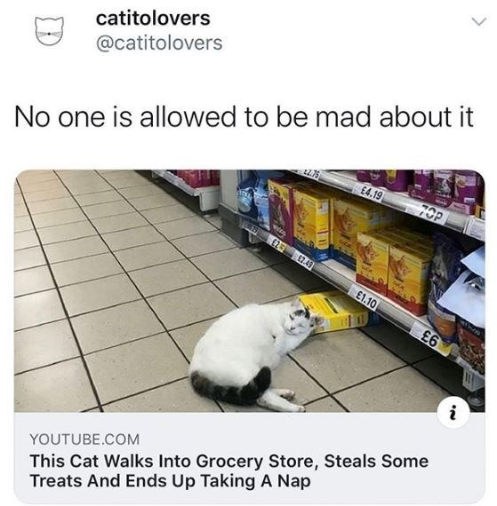 Cat - catitolovers No one is allowed to be mad about it 70P @catitolovers £4.19 12.49 £1.10 £6 This Cat Walks Into Grocery Store, Steals Some Treats And Ends Up Taking A Nap YOUTUBE.COM