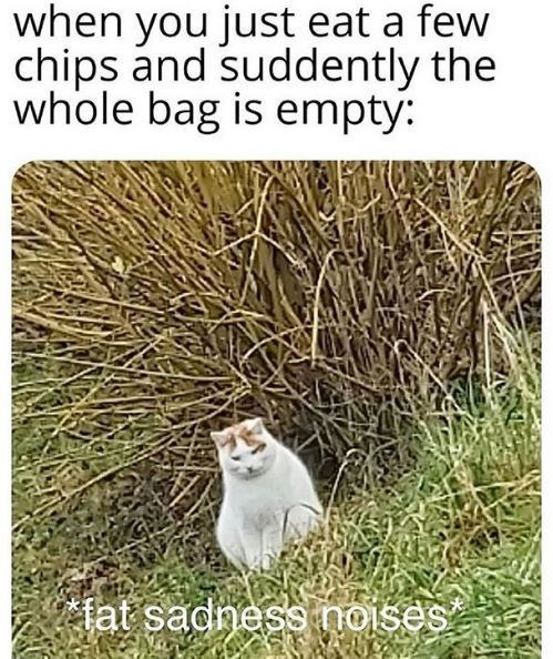 Cat - when you just eat a few chips and suddently the whole bag is empty: fat sadness noises
