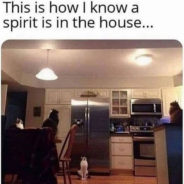 Sky - This is how I know a spirit is in the house...