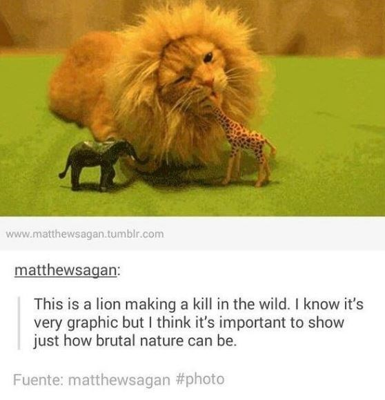 Lion - www.matthewsagan.tumblr.com matthewsagan: This is a lion making a kill in the wild. I know it's very graphic but I think it's important to show just how brutal nature can be. Fuente: matthewsagan #photo