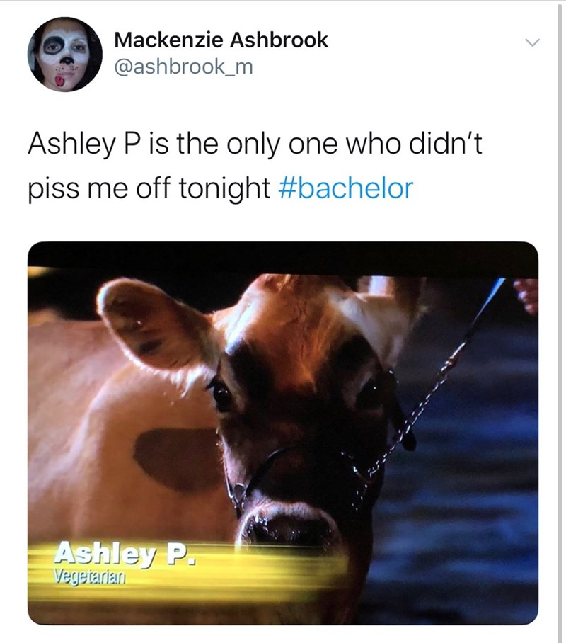 Snout - Mackenzie Ashbrook @ashbrook_m Ashley P is the only one who didn't piss me off tonight #bachelor Ashley P. Vegetarlan