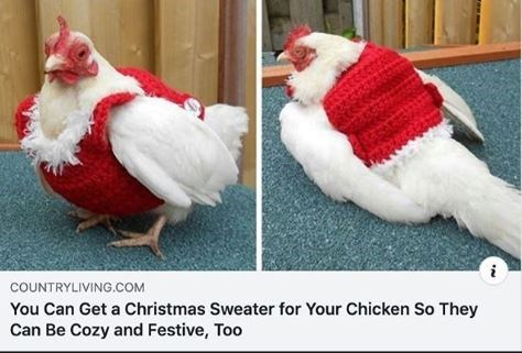 Bird - COUNTRYLIVING.COM You Can Get a Christmas Sweater for Your Chicken So They Can Be Cozy and Festive, Too