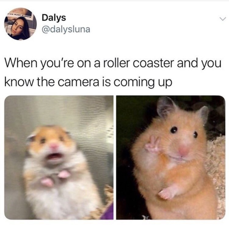 Hamster - res moT OROW Dalys @dalysluna When you're on a roller coaster and you know the camera is coming up