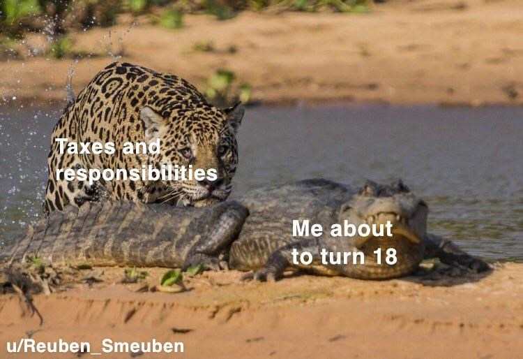 Mammal - Taxes and: responsibilities Me about to turn 18 u/Reuben_Smeuben
