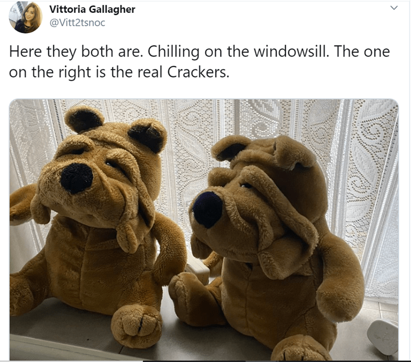 Stuffed toy - Vittoria Gallagher @Vitt2tsnoc Here they both are. Chilling on the windowsill. The one on the right is the real Crackers. wwww