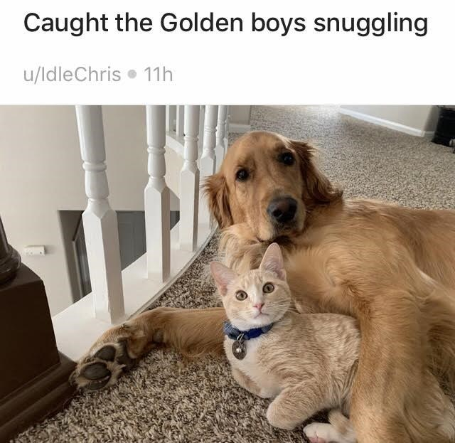 Dog - Caught the Golden boys snuggling u/ldleChris • 11h