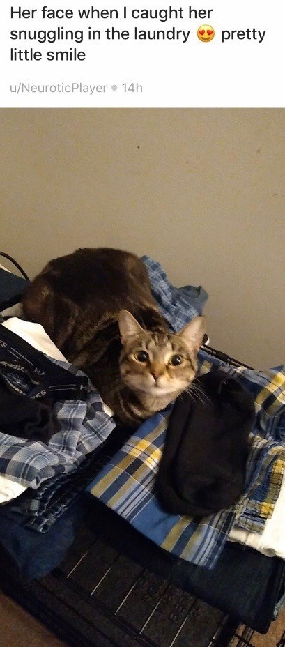 Cat - Her face when I caught her snuggling in the laundry pretty little smile u/NeuroticPlayer 14h HA