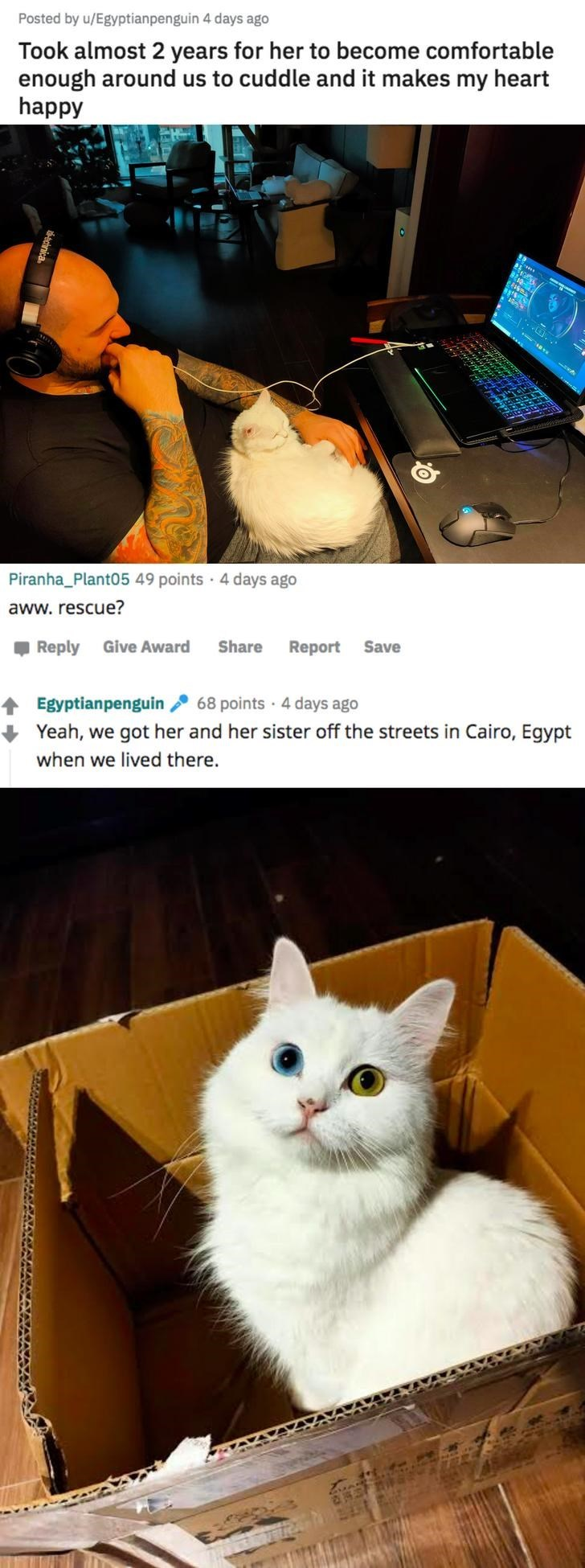 Cat - Posted by u/Egyptianpenguin 4 days ago Took almost 2 years for her to become comfortable enough around us to cuddle and it makes my heart happy Piranha_Plant05 49 points · 4 days ago aww. rescue? , Reply Give Award Share Report Save Egyptianpenguin 68 points 4 days ago Yeah, we got her and her sister off the streets in Cairo, Egypt when we lived there. cinica.