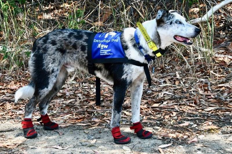 Vertebrate - Dete tion Dog ifaw amanal Fund for AnimWelfare