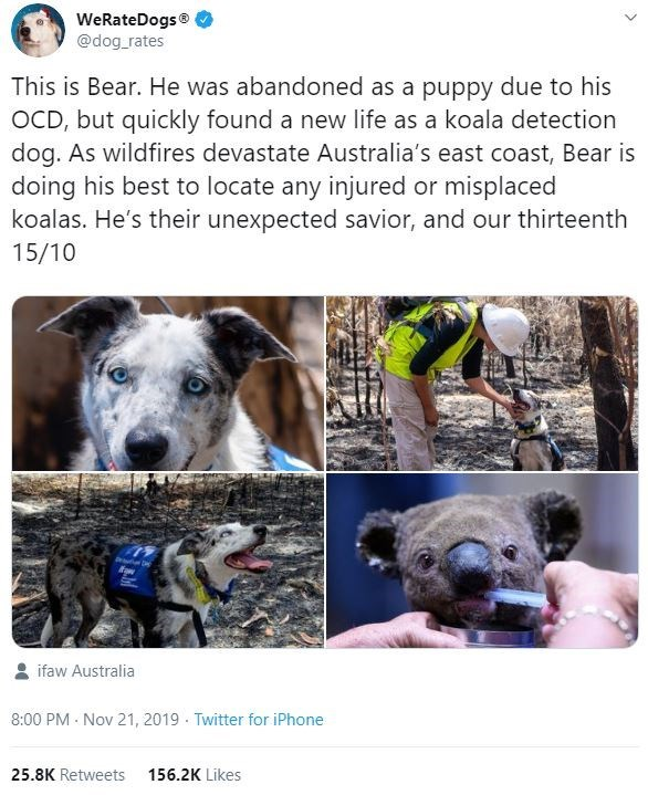 Dog breed - WeRateDogs® @dog_rates This is Bear. He was abandoned as a puppy due to his OCD, but quickly found a new life as a koala detection dog. As wildfires devastate Australia's east coast, Bear is doing his best to locate any injured or misplaced koalas. He's their unexpected savior, and our thirteenth 15/10 ifaw Australia 8:00 PM - Nov 21, 2019 · Twitter for iPhone 25.8K Retweets 156.2K Likes