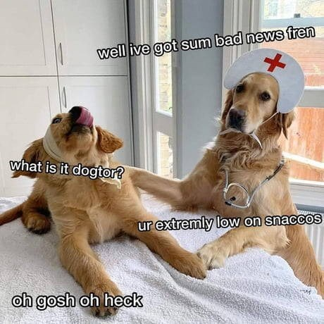Dog - well ive got sum bad news fren what is it dogtor? ur extremly low on snaccos oh gosh oh heck
