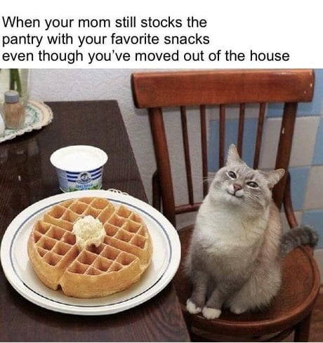 Food - When your mom still stocks the pantry with your favorite snacks even though you've moved out of the house