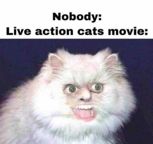Cat - Nobody: Live action cats movie: