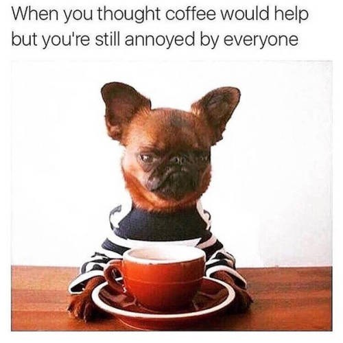 Canidae - When you thought coffee would help but you're still annoyed by everyone