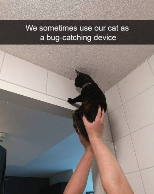 Cat - We sometimes use our cat as a bug-catching device