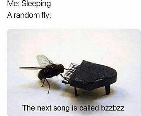 Insect - Me: Sleeping A random fly: The next song is called bzzbzz