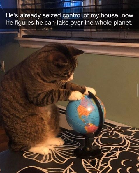 cat putting its paws on a world map globe : he's already seized control of my house, now he figures he can take over the whole planet