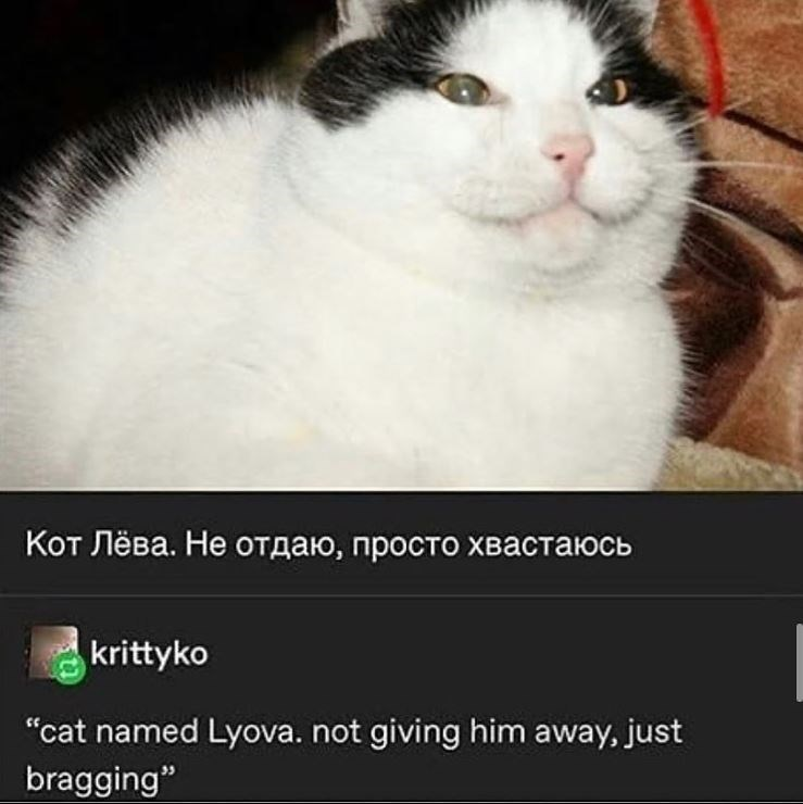 chonky white and black cat. translation from russian: cat named lyova. not giving him away, just bragging.