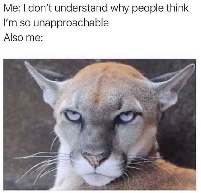 me: i don't understand why people think i'm so unapproachable. also me: puma cat with a mean expression.