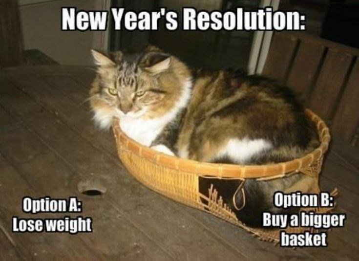 my new year's resolution: option a: lose weight. option b: buy a bigger basket. fluffy cat sitting in a broken wicker basket with its butt sticking out.