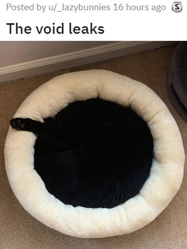 round cat bed with a black cat curled in it sleeping, one paw hanging out. the void leaks.