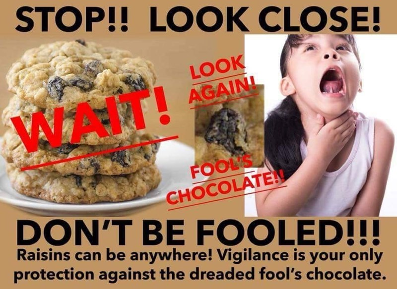Junk food - STOP!! LOOK CLOSE! LOOK AGAINL FOOLS CHOCOLATE DON'T BE FOOLED!!! Raisins can be anywhere! Vigilance is your only protection against the dreaded fool's chocolate.