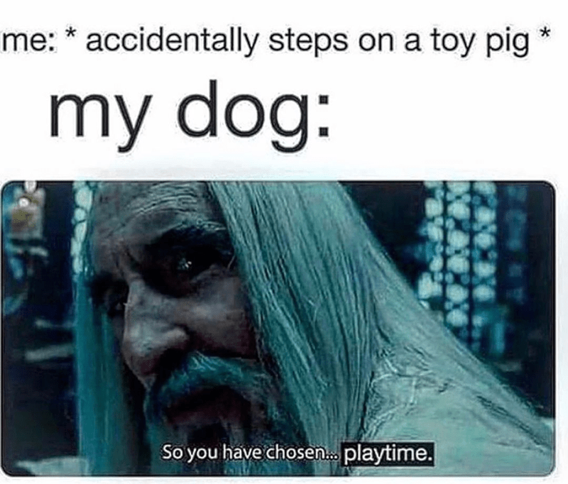 funny meme about playing with dog, playtime, saruman. so you have chosen playtime. lord of the rings. accidentally steps on toy pig