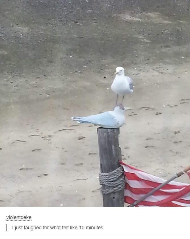 Bird - violentdeke | I just laughed for what felt like 10 minutes