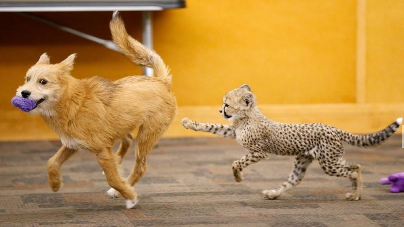 cute dog cheetah friends