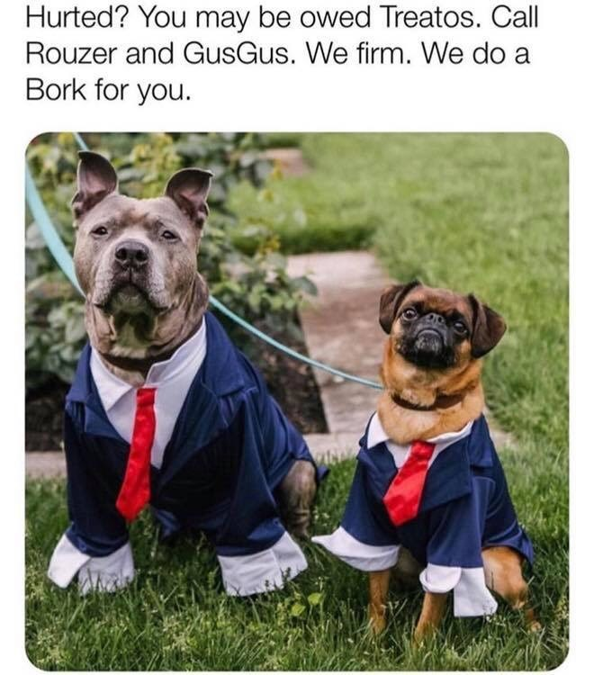 Dog - Dog - Hurted? You may be owed Treatos. Call Rouzer and GusGus. We firm. We do a Bork for you.