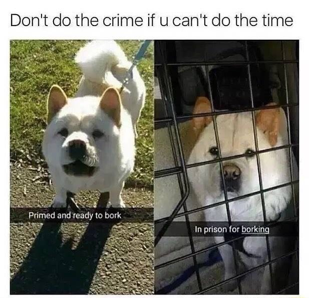 Dog - Vertebrate - Don't do the crime if u can't do the time Primed and ready to bork In prison for borking
