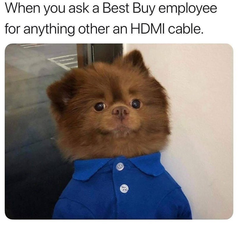 Dog - Dog - When you ask a Best Buy employee for anything other an HDMI cable.